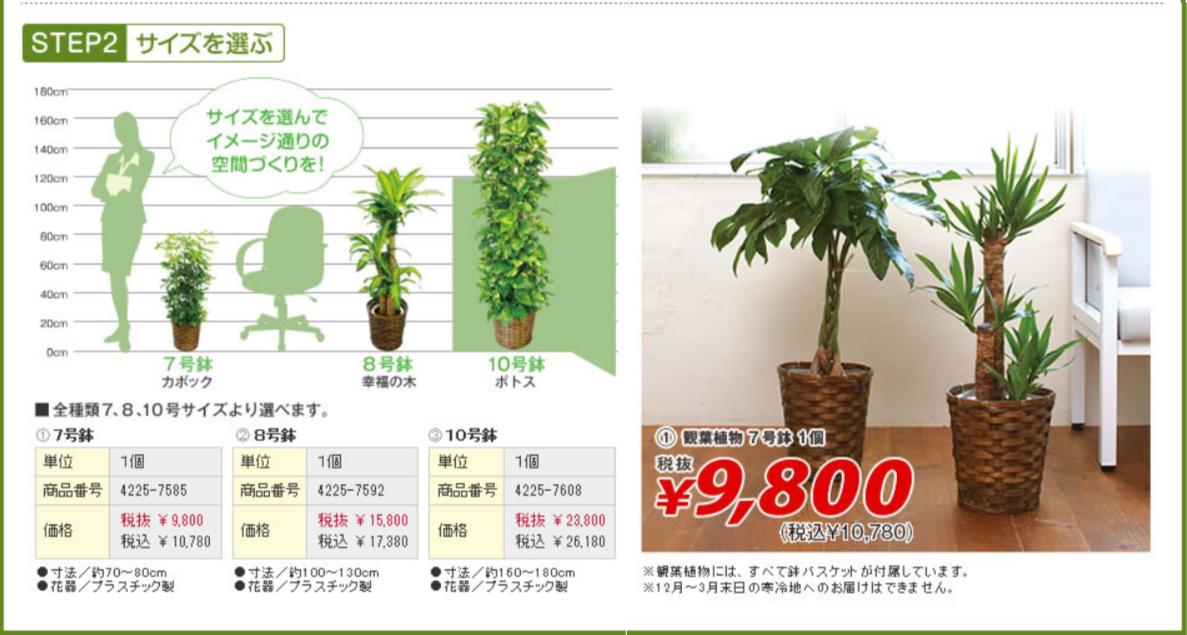 生花&グリーンギフト(胡蝶蘭・観葉植物)|カウネット