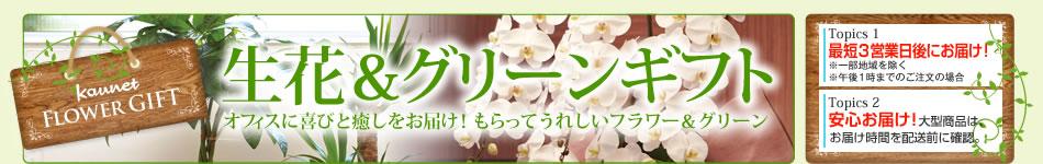 カウネット 花 グリーン ギフト